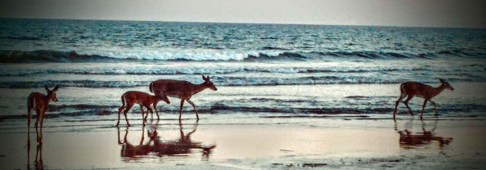 Kiawah Island Rentals Oceanfront Pet Friendly