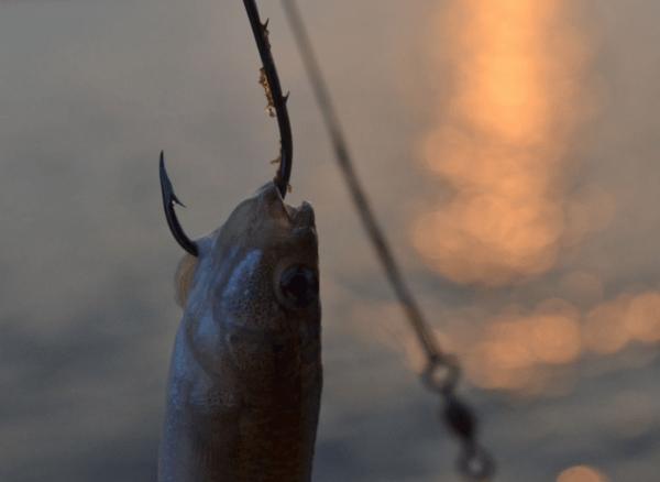 Fishing summer Kiawah island events