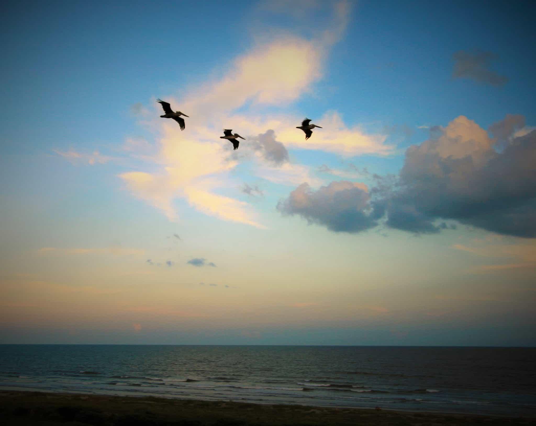 Kiawah Island birds