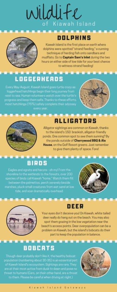 kiawah island wildlife