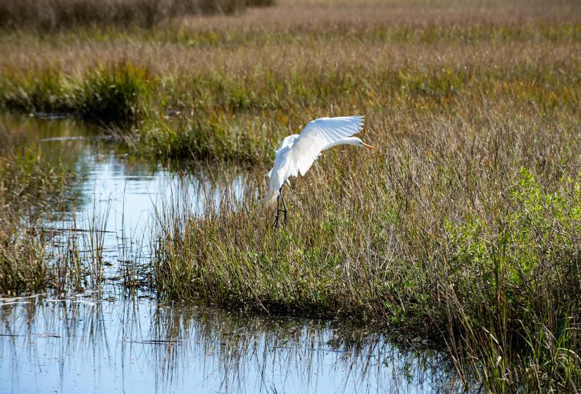 129 Blue Heron Pond Road, Kiawah Island, SC 29455, ,Homesites,For Sale,Blue Heron Pond,21003282